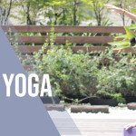 Yoga Journey BEGINNER YOGA