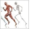 2019/10/12-13.10/19-20人體解剖學系列課程